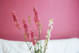 flowers-pink